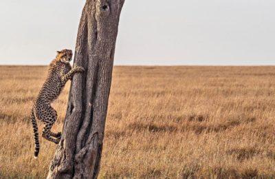 Find the Most Endangered Species in Uganda