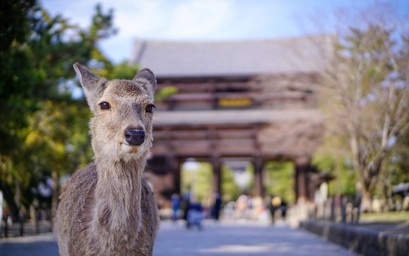 Most Charming Attractions To Explore In Japanese City Of Nara